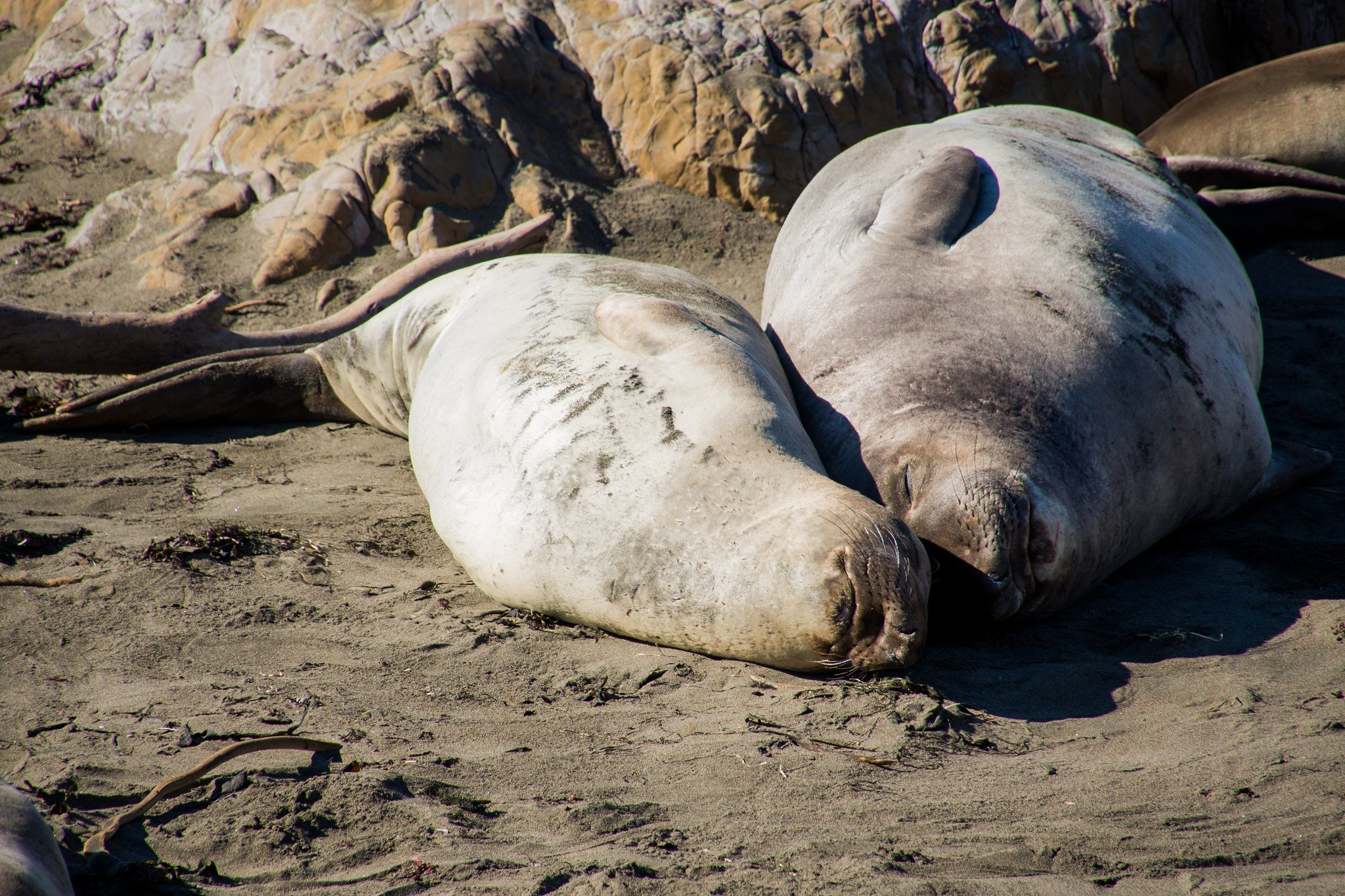 Elephant Seals, Pacific Coast Highway - A 15-Day California Road-Trip Itinerary