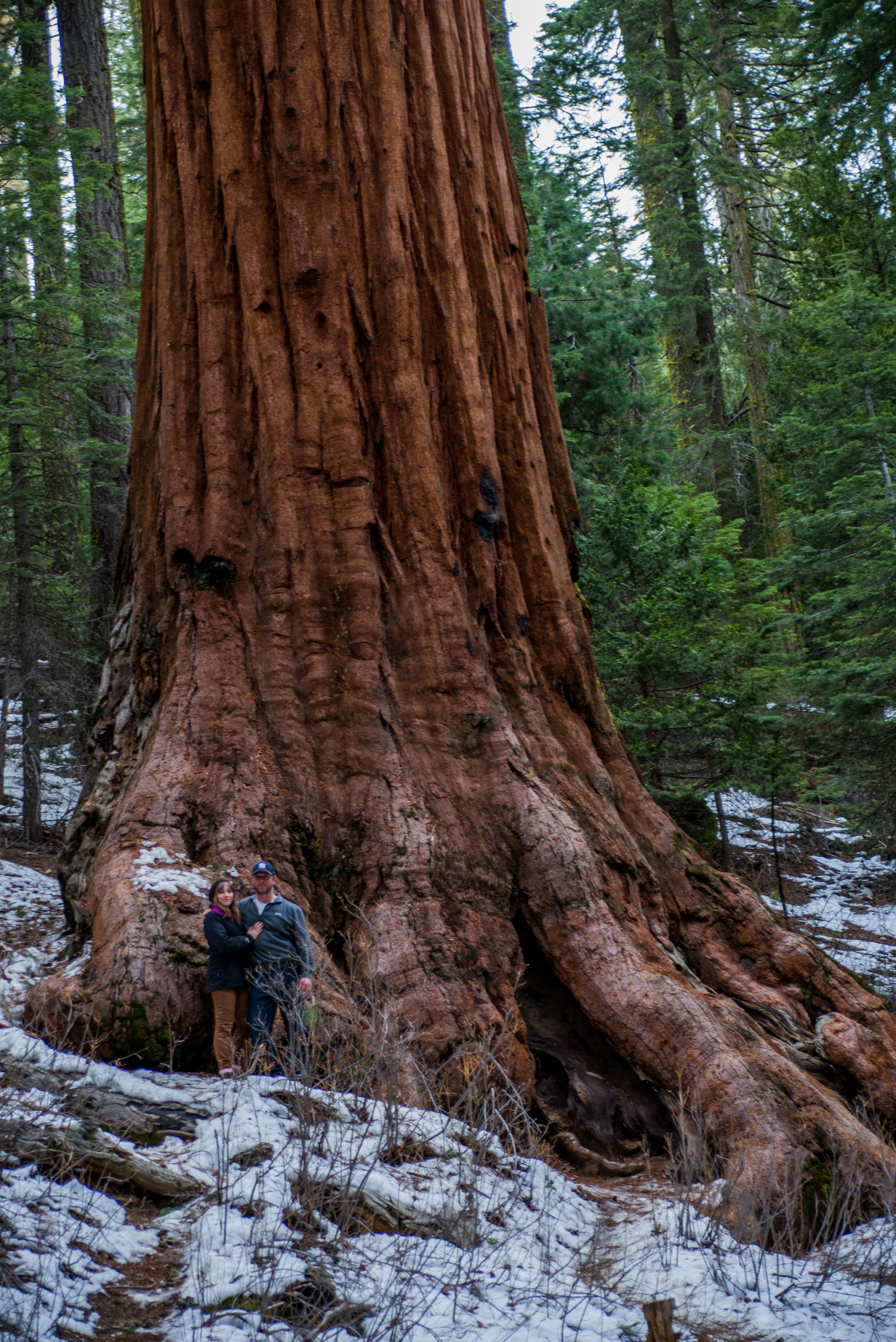 Giant Redwoods, Mariposa Grove, California - A 15-Day California Road-Trip Itinerary