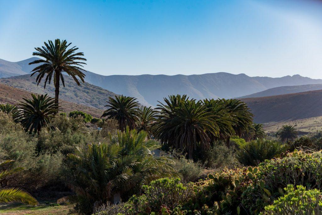 Fuerteventura, Canaries - My 2018 Travel Highlights